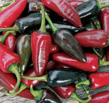 Black Hungarian Pepper