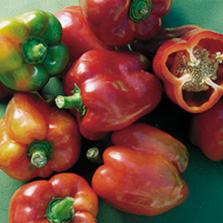 Bullnose Pepper