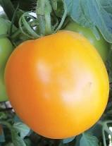 0027-david-davidsons-tomato-organic