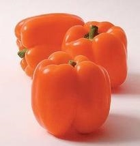Horizon Sweet Bell Pepper