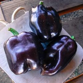 New Purple Beauty Pepper